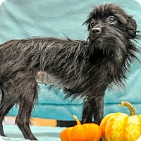 Adopt A Pet :: Donna - Gainesville, FL