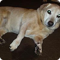 Adopt A Pet :: Mama-Courtesy Post - Alpharetta, GA
