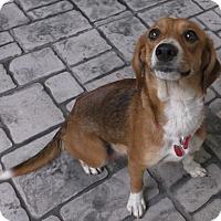 Adopt A Pet :: Jolene - Tampa, FL