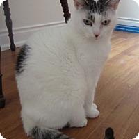 Adopt A Pet :: Pippi - Richmond Hill, ON