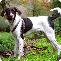 Adopt A Pet :: Paulie - Penngrove, CA