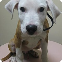 Adopt A Pet :: Jake - Gary, IN