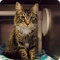 Adopt A Pet :: 458471 - Huntsville, AL