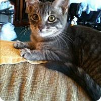 Adopt A Pet :: Casey - Madisonville, LA