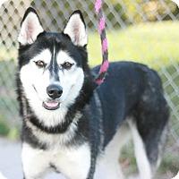 Adopt A Pet :: YoYo - Canoga Park, CA