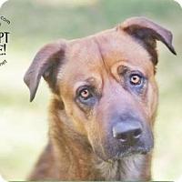 Adopt A Pet :: LEO - Chandler, AZ