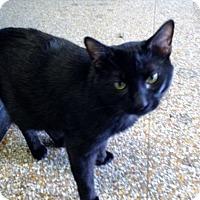 Adopt A Pet :: Joey Tribbiani - Chicago, IL