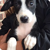 Adopt A Pet :: Mystic (11 lb) Video! - SUSSEX, NJ