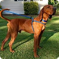 Adopt A Pet :: Killian - Atlanta, GA