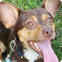 Adopt A Pet :: Andy - Richmond, KY