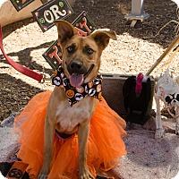 Adopt A Pet :: LILLITH - Phoenix, AZ