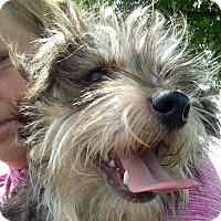 Adopt A Pet :: Lil' Man - Macomb, IL