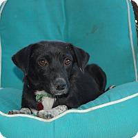 Adopt A Pet :: Becky Hammon - San Antonio, TX