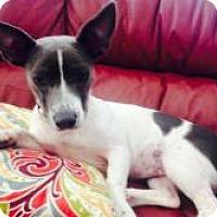Adopt A Pet :: Davina - New Smyrna Beach, FL
