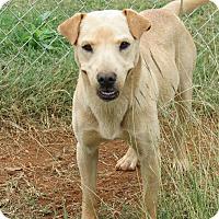 Adopt A Pet :: Nutmeg - Marble Falls, TX