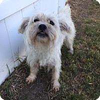 Adopt A Pet :: Orson - Rincon, GA
