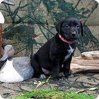 Adopt A Pet :: Atlanta - Malakoff, TX
