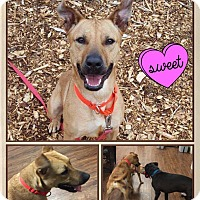 Adopt A Pet :: Pixie Stix - Colmar, PA