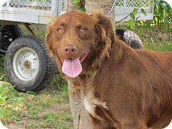 JOSIE | Adopted Dog | ...