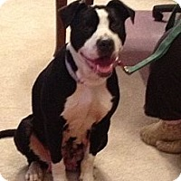 Adopt A Pet :: Abby - Avon, OH