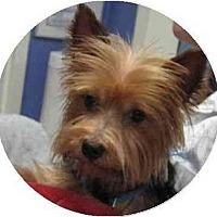 Adopt A Pet :: Leo - Conroe, TX