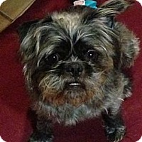 Adopt A Pet :: Dexter - Mount Kisco, NY
