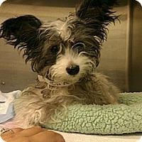 Adopt A Pet :: Ricky - Encinitas, CA
