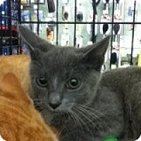 Adopt A Pet :: Larry - Riverside, RI