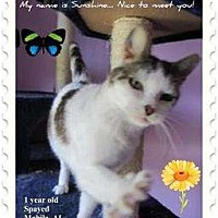 Adopt A Pet :: Sunshine - Mobile, AL
