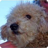 Adopt A Pet :: Mocha - Reisterstown, MD