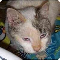 Adopt A Pet :: Lucy - URGENT!!! - Richmond, VA