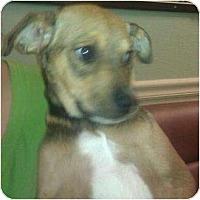 Adopt A Pet :: Alexander - Phoenix, AZ