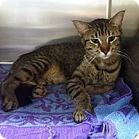 Adopt A Pet :: Sophie - Edmonton, AB
