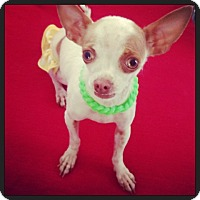 Adopt A Pet :: Izzy- 3 lb.Happy Girl! - Los Angeles, CA