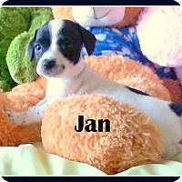 Adopt A Pet :: JAN - Higley, AZ