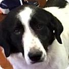 Adopt A Pet :: Eponine