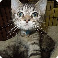 Adopt A Pet :: Cornelius - Medina, OH