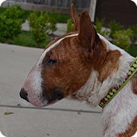 Adopt A Pet :: Rocco - Houston, TX