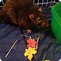 Adopt A Pet :: BALTAR - Philadelphia, PA