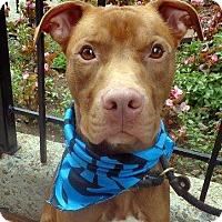 Adopt A Pet :: Henny - Kimberton, PA