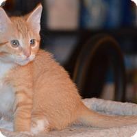 Adopt A Pet :: Vortex - Milwaukee, WI