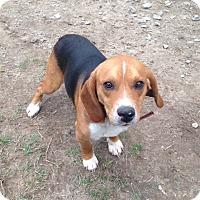 Adopt A Pet :: Fisher - Cashiers, NC