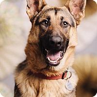 Adopt A Pet :: Zeus - Portland, OR