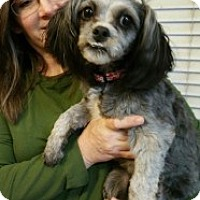 Adopt A Pet :: Sparky - Ogden, UT