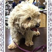 Adopt A Pet :: Monte - TX - Tulsa, OK