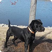 Adopt A Pet :: Bernie - Lewisville, IN