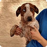 Adopt A Pet :: Aires - Oviedo, FL