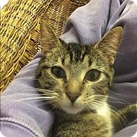 Adopt A Pet :: Zoe - Gadsden, AL