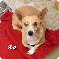 Adopt A Pet :: Bell - Las Vegas, NV