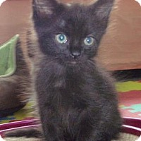 Adopt A Pet :: Chiron - Fort Collins, CO